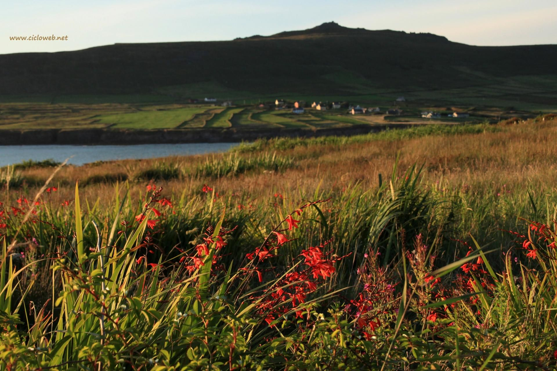 0914 - Verso ovest, dal Clifftop, Dingle Peninsula.JPG